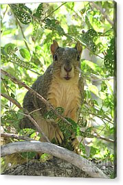 Acrylic Print featuring the photograph On Alert by Michelle H