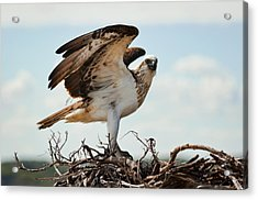 On Guard Acrylic Print by Heather Thorning