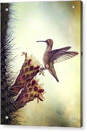 On The Edge II  Acrylic Print by Saija  Lehtonen