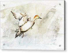 On The Fly Acrylic Print by Kolor Palette