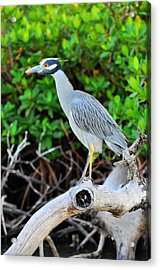 On The Limb Acrylic Print by Barry R Jones Jr