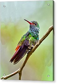 Acrylic Print featuring the photograph On The Look-out by Susi Stroud
