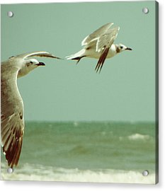 On The Wings Of A Seagull Acrylic Print by Jessica Brawley