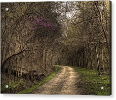 On This Trail Acrylic Print by William Fields