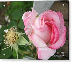One Arriving And One Leaving Acrylic Print by Sandra Maddox