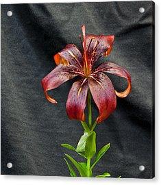 One Black Lily Acrylic Print
