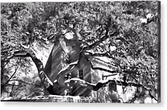 Acrylic Print featuring the photograph One Cool Old Tree by Katie Wing Vigil