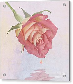 One Drop Of Love Acrylic Print by John Edwards