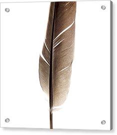 One Feather Acrylic Print by Bernard Jaubert
