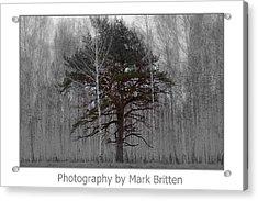 One Acrylic Print by Mark Britten