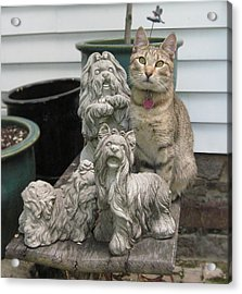 One Of These Things Is Not Like The Other Acrylic Print by Tina Ann Byers