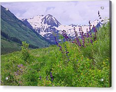 One-sided Penstemon Acrylic Print