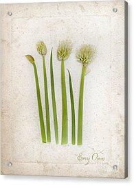 Onion Art Acrylic Print
