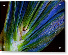 Onions Acrylic Print by Michael Friedman