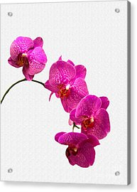 Acrylic Print featuring the photograph Oodles Of Purple Orchids by Michael Waters