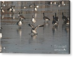 Acrylic Print featuring the photograph Oops That's Ice by Mark McReynolds
