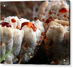 Oozing Fungus Acrylic Print by Chad and Stacey Hall