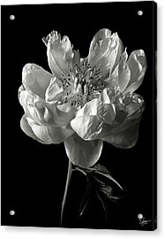 Open Peony In Black And White Acrylic Print by Endre Balogh