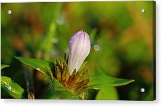 Opening Soon Acrylic Print by Don Youngclaus