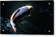 Optical Koi Llusion Acrylic Print by Don Mann