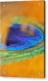 Orange And Blue Feather Acrylic Print by Puzzles Shum