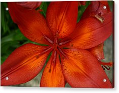 Acrylic Print featuring the painting Orange Beauty by Dolores  Deal