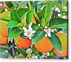 Orange Blossom Special Acrylic Print by Carol  Bradley