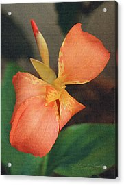 Orange Bud And Petals Acrylic Print by Robert Kernodle