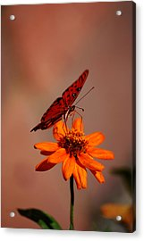 Orange Butterfly Orange Flower Acrylic Print by Lori Tambakis