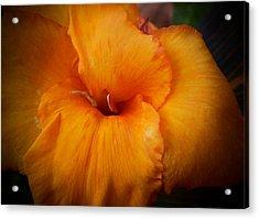Orange Canna Flower Acrylic Print by D J Larsen