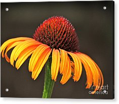 Acrylic Print featuring the photograph Orange Crown by Eve Spring