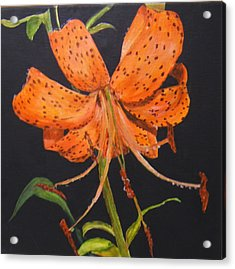 Orange Day Lilies Acrylic Print by Maureen Pisano