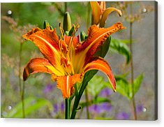 Acrylic Print featuring the photograph Orange Day Lily by Tikvah's Hope