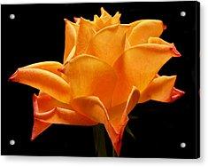 Orange Delight Acrylic Print by Terence Davis