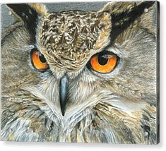 Orange-eyed Owl Acrylic Print