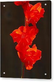 Orange Fire Acrylic Print by Jim Moore
