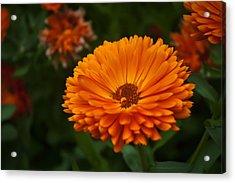 Orange Flower At The Manor Acrylic Print by Noah Katz