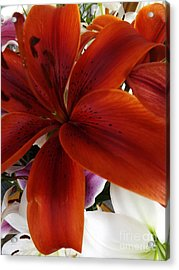 Acrylic Print featuring the photograph Orange Glow by Gary Brandes