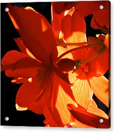 Acrylic Print featuring the photograph Orange Glow by Trever Miller