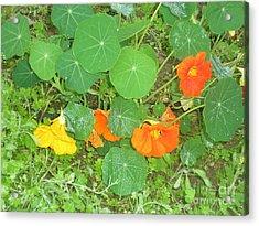 Orange Ivy Acrylic Print
