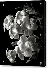 Orange Jubilee In Black And White Acrylic Print