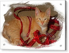 Orange Kitten With Red Ribbon Acrylic Print by Judy Deist