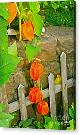 Orange Lanterns Acrylic Print