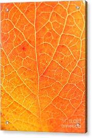Orange Leaf Abstract Acrylic Print by Mariah Stone