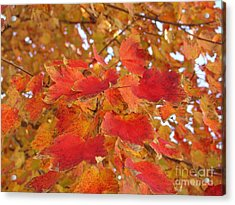 Orange Leaves 4 Acrylic Print