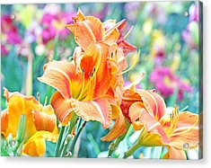 Orange Lilies Acrylic Print by Becky Lodes