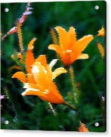 Orange Lilies Acrylic Print by Elizabeth  Doran