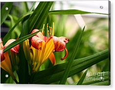 Acrylic Print featuring the photograph Orange Lily by Denise Pohl