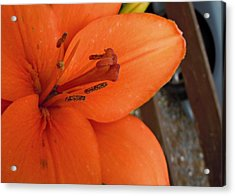 Orange Lily Acrylic Print by Julie Williams