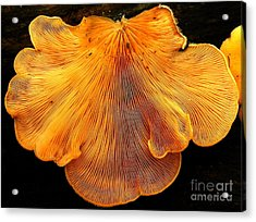Orange Mock Oyster Acrylic Print